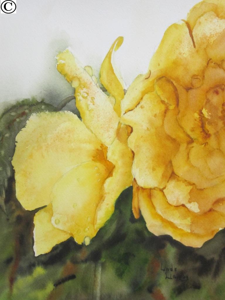 020 bégonia yellow 10-7½po
